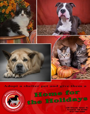 workingFinal fall adoption poster_collage.jpg